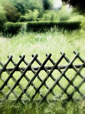 Jägerzaun vor verwildertem Garten - p8260063 von Roy Botterell