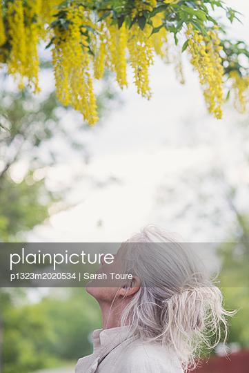 Woman looking at a flowering tree - p1323m2020534 von Sarah Toure