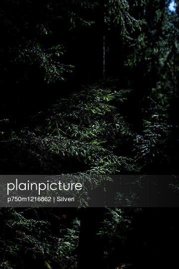 Wald - p750m1216862 von Silveri
