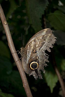 Brauner Schmetterling - p0750310 von Lukasz Chrobok