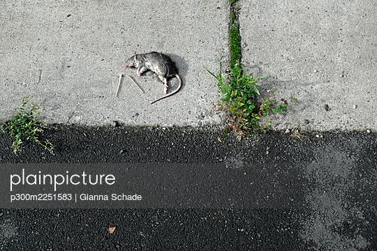 Dead rat lying on sidewalk - p300m2251583 by Gianna Schade