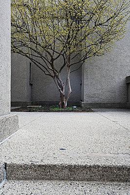 USA, Chicago, Baum - p2687167 von Christof Mattes