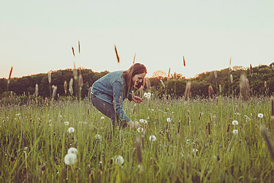 Smiling teenage girl picking blowballs on a meadow at evening twilight - p300m2113877 von Annie Hall