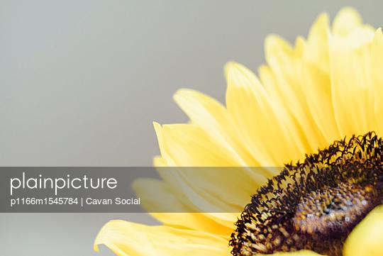 p1166m1545784 von Cavan Social