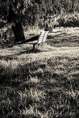 Woodland Park, Solitary bench in woodland park - p1170m2110406 by Bjanka Kadic