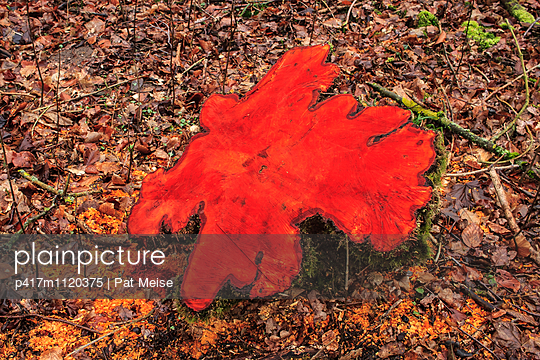 Baumscheibe - p417m1120375 von Pat Meise