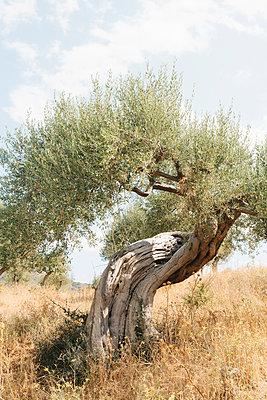 Oliver tree - p1683m2272559 by Luisa Zanzani