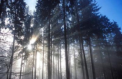 Sonne scheint durch Bäume - p1870207 von Katarzyna Zommer