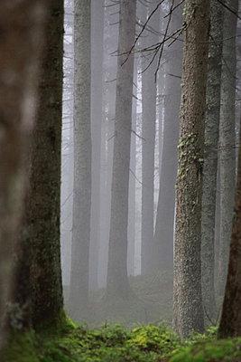 Nebelwald - p277m883377 von Dieter Reichelt