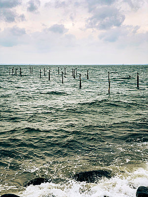 Stakes with cormorants in the Baltic Sea - p382m2283955 by Anna Matzen