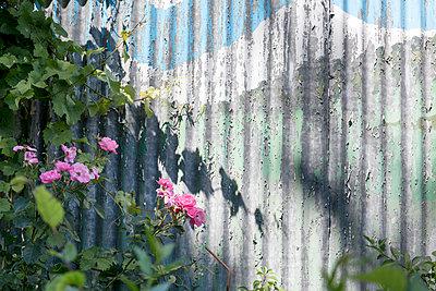 verwitterter Gartenzaun - p949m1200295 von Frauke Schumann