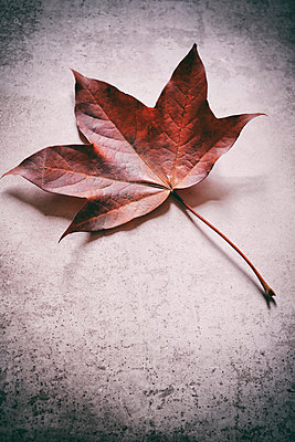 Still life of autumnal leaf on speckled background - p597m2220258 by Tim Robinson