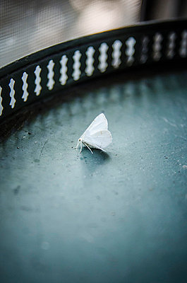 Small White Moth on Table - p694m844274 by Eric Schwortz