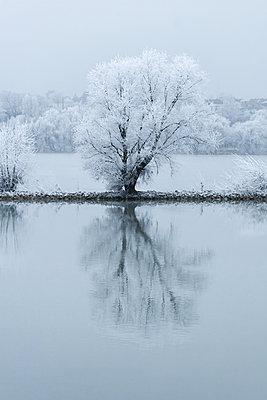 Baum am Rheinufer - p979m1444900 von Martin Kosa