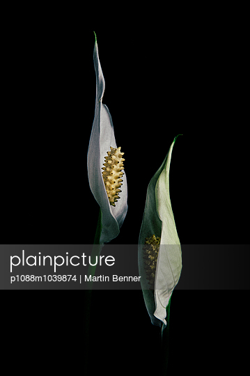 Callas - p1088m1039874 by Martin Benner