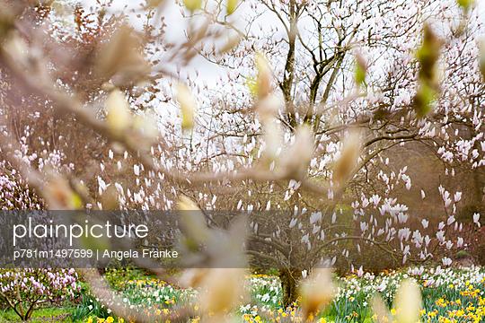 Blütenzauber - p781m1497599 von Angela Franke