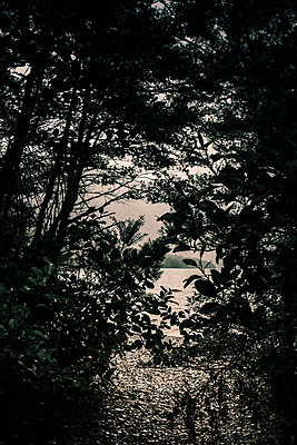Lake Rotoiti, Bergsee hinter Bäumen - p1255m1574972 von Kati Kalkamo