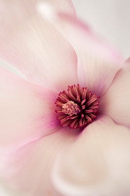 Softness - p495m793572 by Jeanene Scott