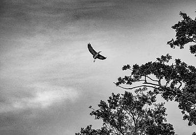 Schwungvoller Flug - p1649m2230600 von jankonitzki