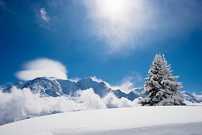 Fir tree covered in fresh snow - p4292884f by Adie Bush