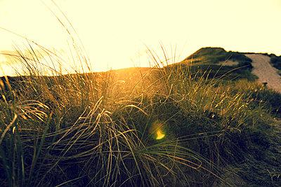 Graslandschaft auf Sylt - p432m1189778 von mia takahara