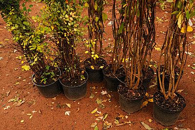 Bereit zum Einpflanzen - p470m758131 von Ingrid Michel