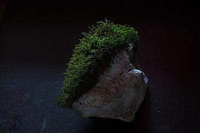 Stein mit Frisur - p1308m2057161 von felice douglas