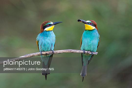 p884m1145373 von John Gooday/ NIS
