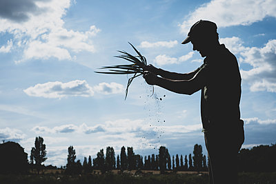 Farmer standing in a field holding freshly picked spring onions. - p1100m2271491 by Mint Images