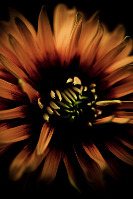 focus on a flower - p4450890 by Marie Docher