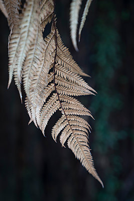 Fern fronds close-up - p1154m1425701 by Tom Hogan