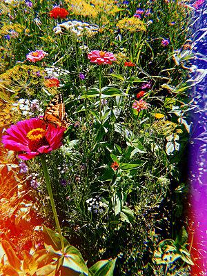 Blumen mit Schmetterling - p1189m2263782 von Adnan Arnaout