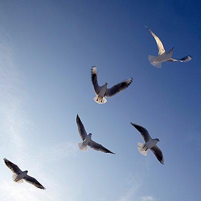 Möwen schweben in der Luft - p4150404 von Tanja Luther