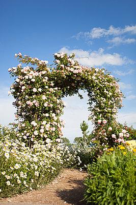 Rosenbogen im Sonnenschein - p505m1048189 von Iris Wolf