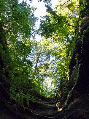 Starved Rock State Park - p815m851540 von Erdmenger