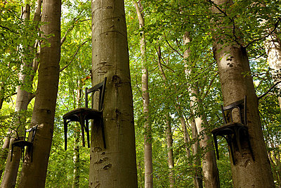 Chairs attached to tree trunks high up in forest - p924m734554f by Franek Strzeszewski