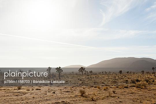 Palm Springs - p756m1158703 von Bénédicte Lassalle