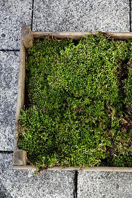 Kiste mit Moos - p1146m1004523 von Stephanie Uhlenbrock