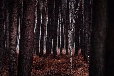 p1585m2283812 by Jan Erik Waider