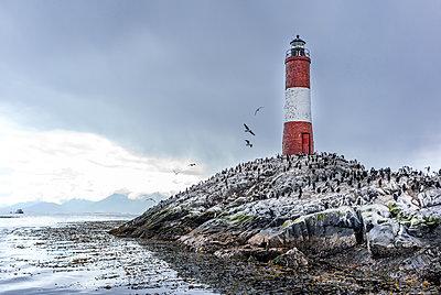 Leuchtturm und Wildtiere - p741m2065652 von Christof Mattes