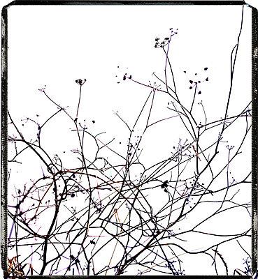 Bare tree - p8130248 by B.Jaubert