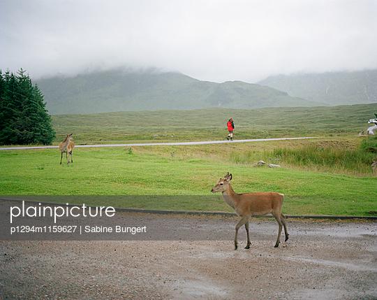 Highlands - p1294m1159627 von Sabine Bungert