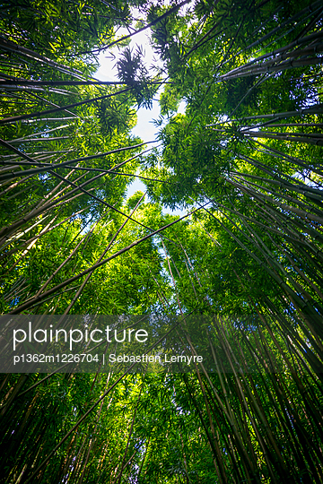 Seven Sacred Pools Trail, bamboo forest, Hana, Pipiwai Trail, Maui, Hawaii, USA - p1362m1226704 by Sebastien Lemyre