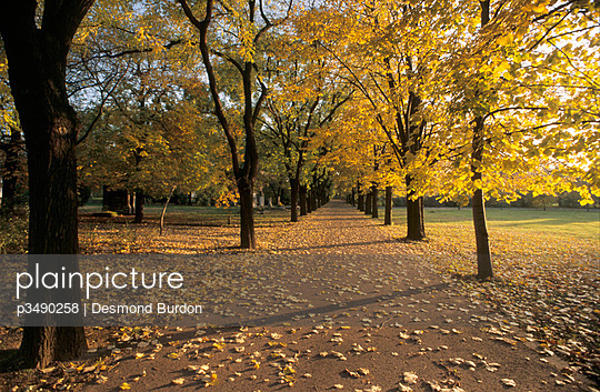 Park in Autumn on Magaret Island in Budapest  - p3490258 by Desmond Burdon