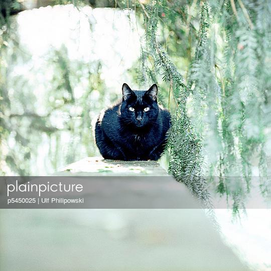 Katze - p5450025 von Ulf Philipowski