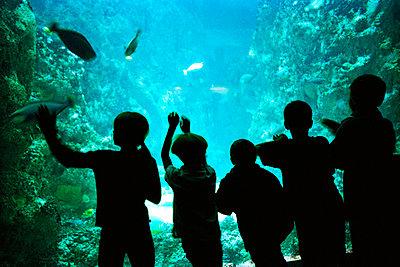 Kinder vor einem Aquarium - p56710635 von Gaëlle Magder