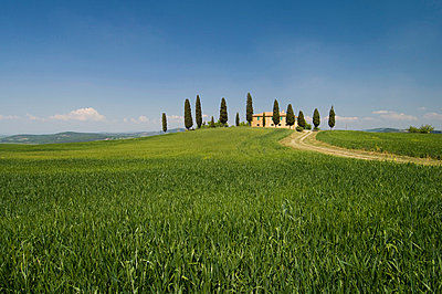 Countryside near Pienza, Val d'Orcia, Siena province, Tuscany, Italy, Europe - p8711770 by Sergio Pitamitz