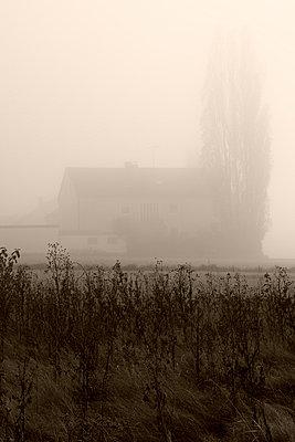 Bauernhof im Nebel - p9792047 von Jaeckel