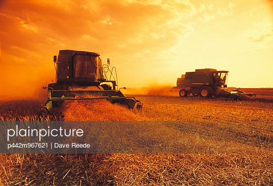 p442m967621 von Dave Reede