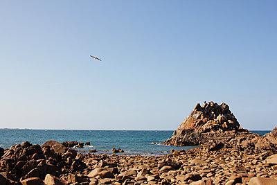 Möwe an der Küste - p1189m1222228 von Adnan Arnaout